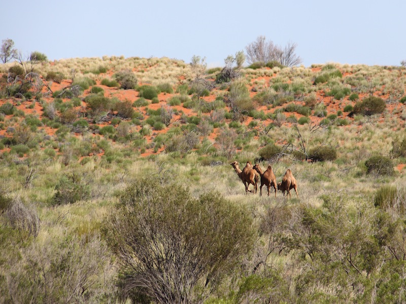Australien-Outback-Kings-Canyon-01