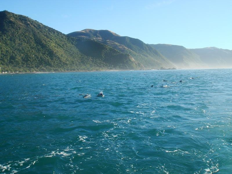 Kaikoura, Neuseeland - März 2010