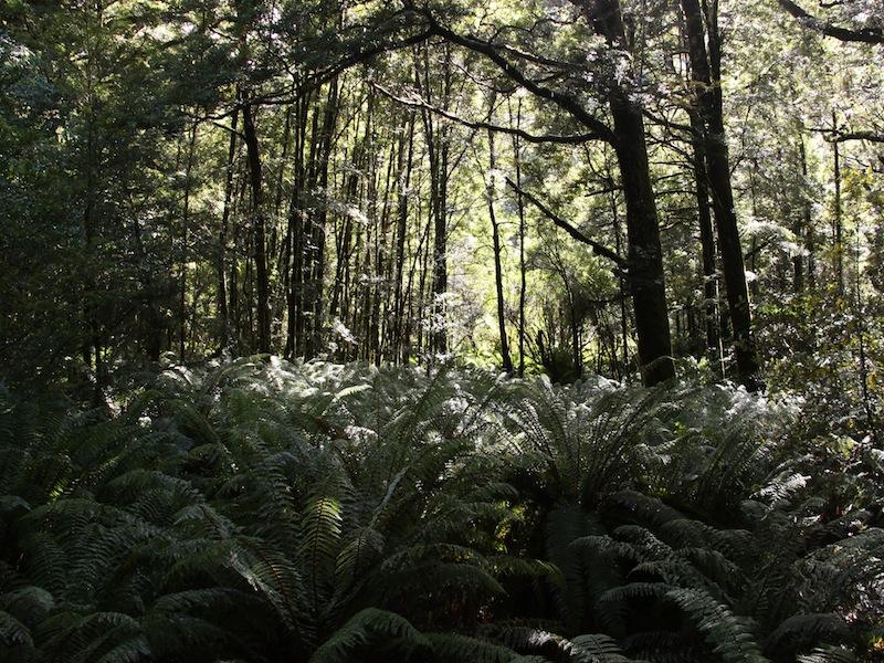 Die Westküste auf der Südinsel, Neuseeland - März 2010