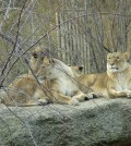 Zoologischer Garten Basel, Schweiz - März 2008