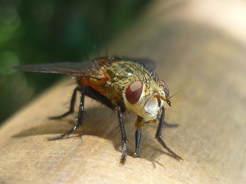 Insekten an den Iguacu Wasserfällen - Januar 2010