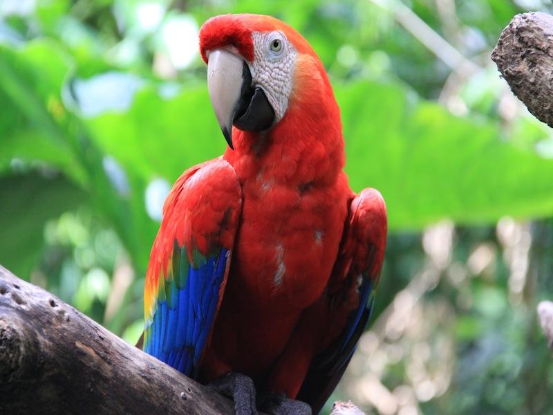 Vogelpark in Iguacu, Brasilien - Dezember 2009